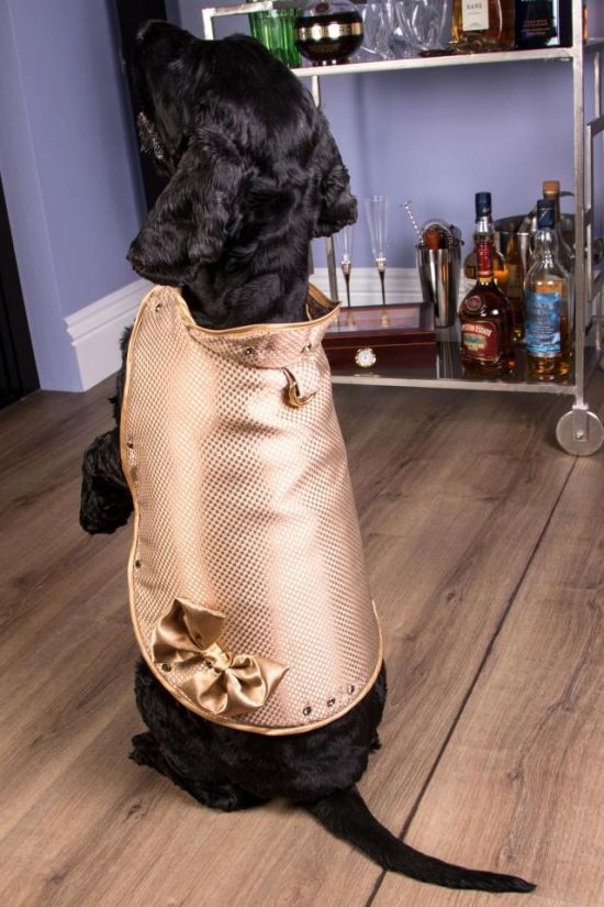 Собачий жилет за 1,4 миллиона долларов