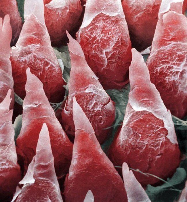 10 привычных вещей под микроскопом