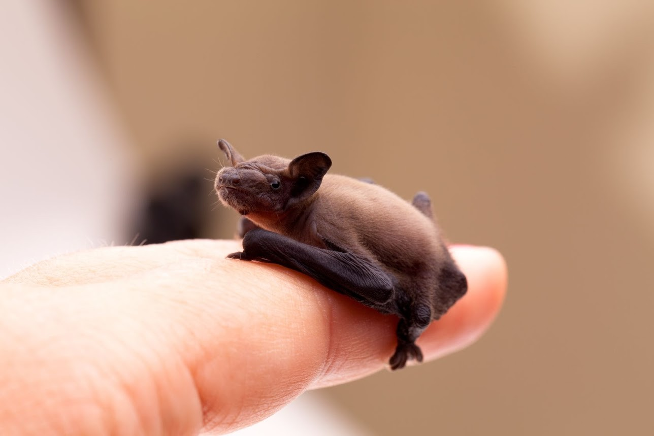 Самые маленькие из мира животных