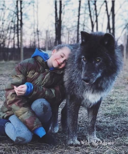 Великолепные гибриды волка и собаки