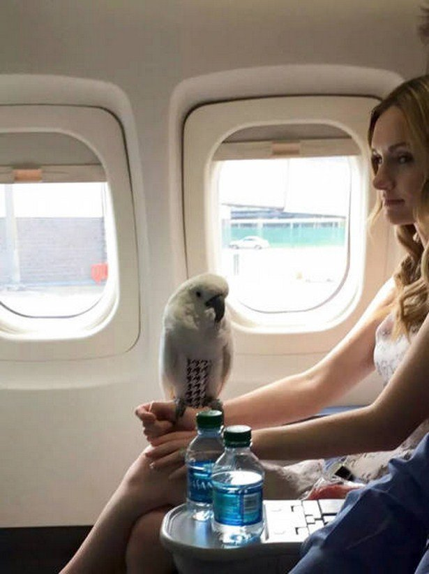 Авиапассажиры, которые отбивают желание летать