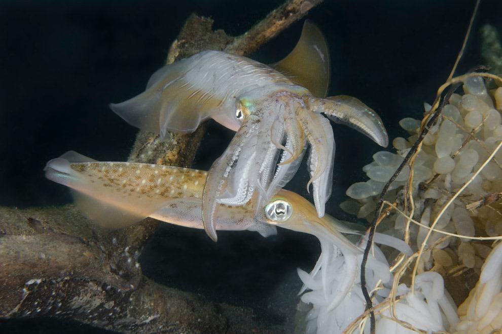 Жители подводного мира в объективе Марти Снайдермана