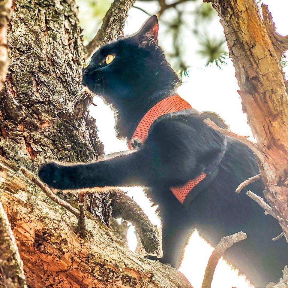 Кот Саймон 2 года путешествует со своим хозяином