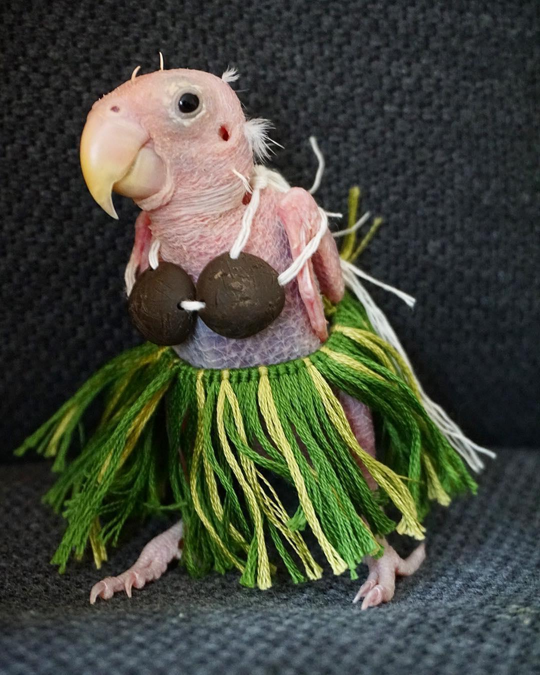 Поклонники шлют вязаную одежду лысому попугаю из Instagram