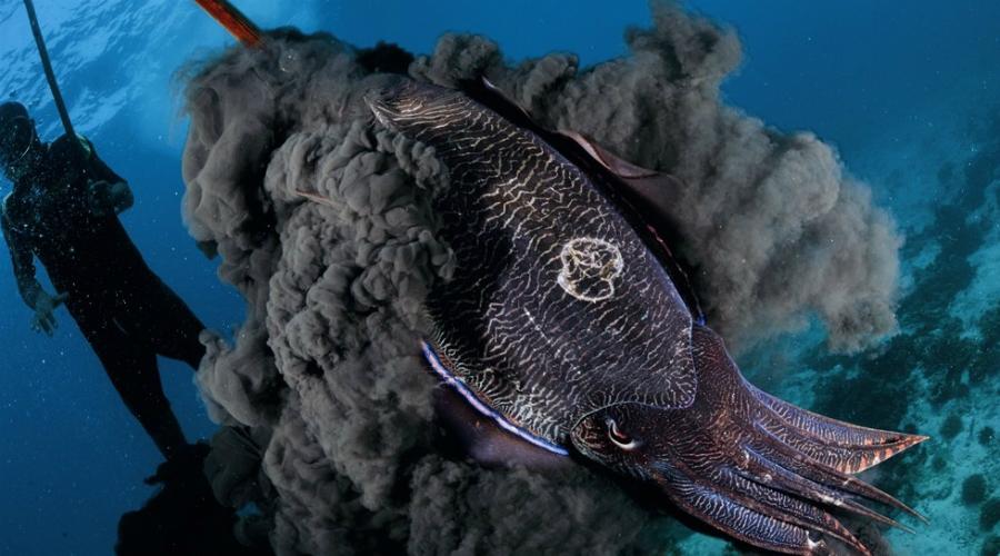 Подводные создания c удивительными способностями
