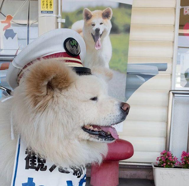 Бездомный пес стал начальником железнодорожного вокзала в Японии