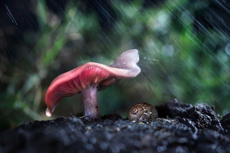 Животные прячутся от дождя