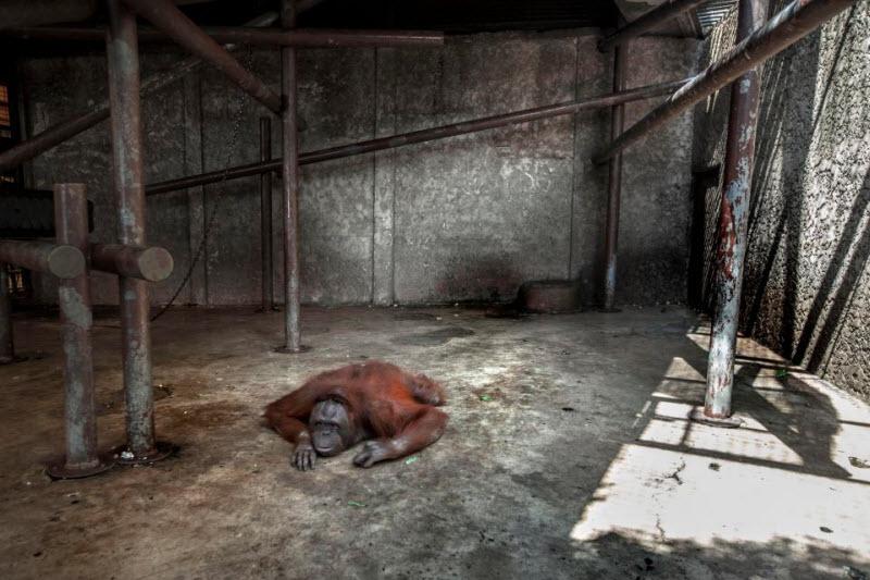 Таиландский зоопарк ужасов
