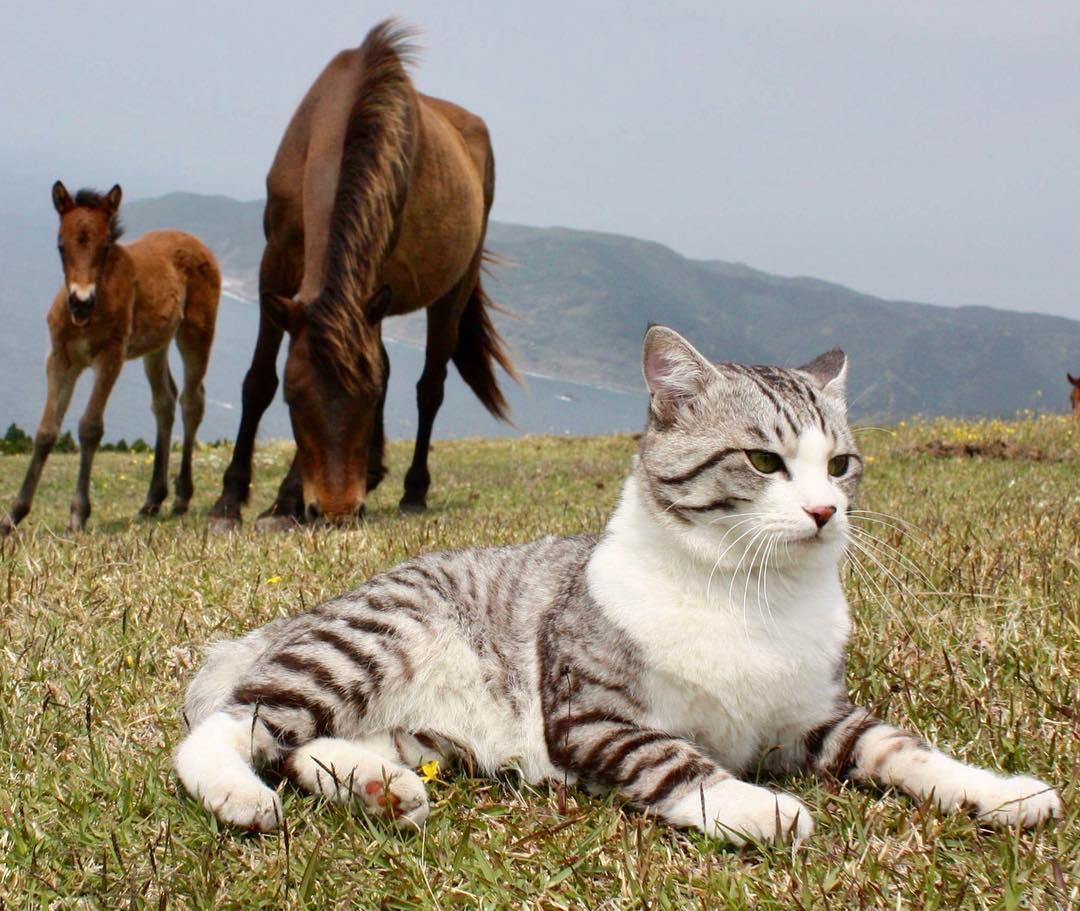 Ньянкичи - фотогеничный кот из Японии
