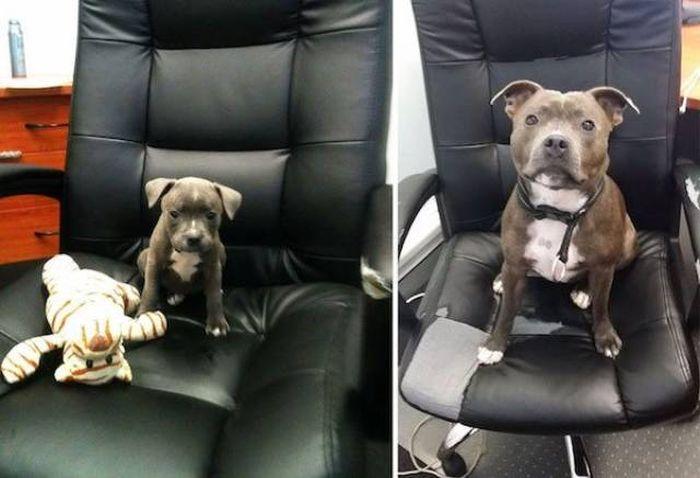 Воссозданные фото собак: тогда и сейчас