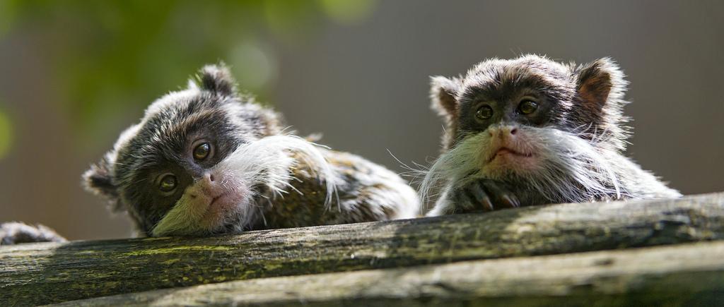 9 необычных животных, о которых вы никогда не слышали