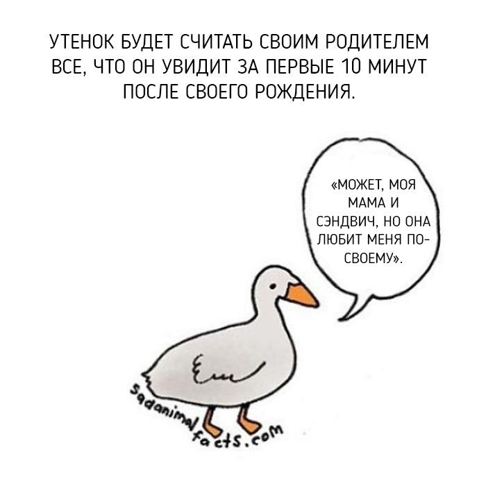 Невеселые факты о животных в иллюстрациях Брук Баркер