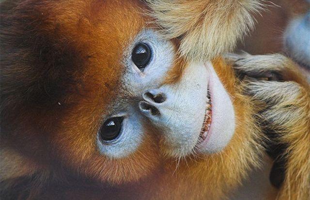 Причудливые и не самые приятные животные