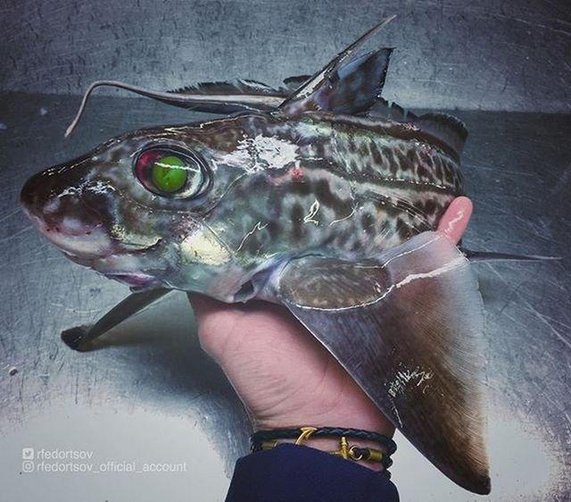 Мурманский рыбак фотографирует самых необычных обитателей моря