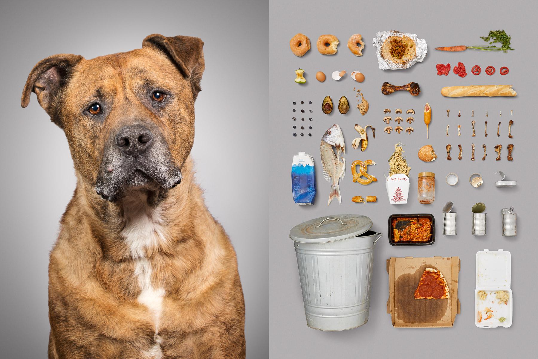 Собаки и вся суть собачьей жизни