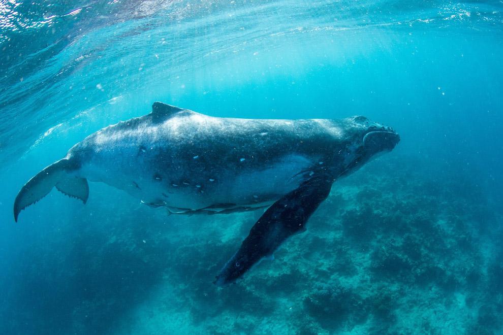 Королевство Тонга - рай с горбатыми китами