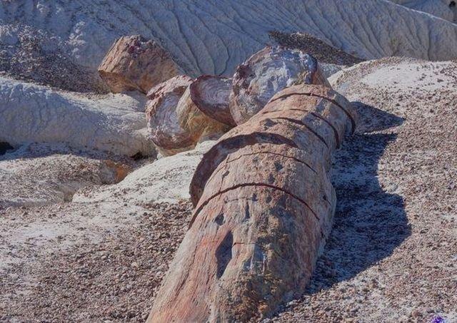 Кристаллы в древних бревнах