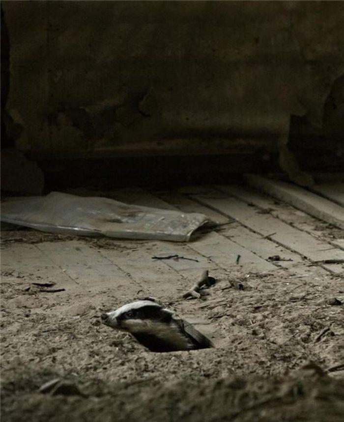 Снимки заброшенных домов, занятых дикими зверями
