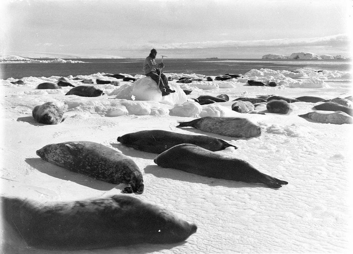 Первая Австралийская антарктическая экспедиция