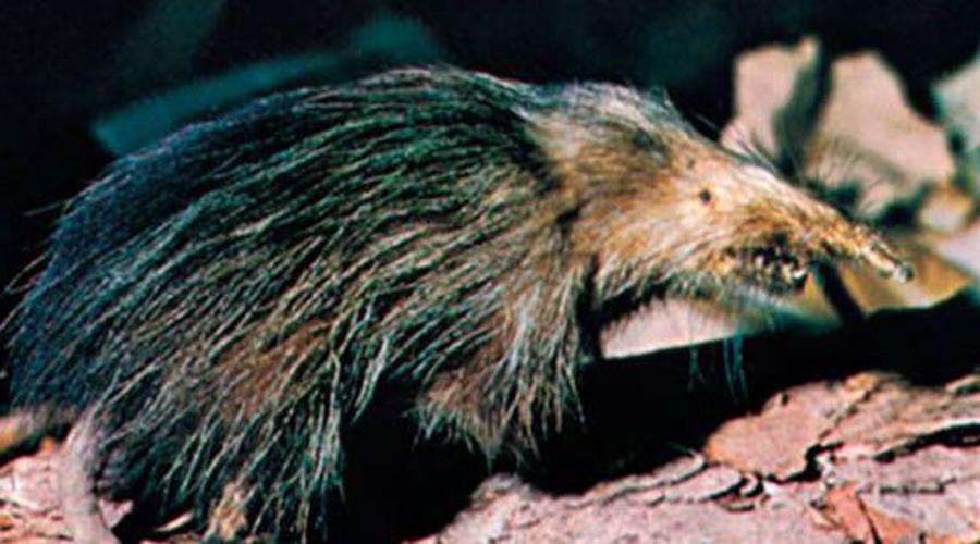 10 животных, про которых можно снимать фильмы ужасов