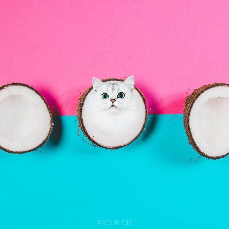 Котики и еда — забавный проект от российской художницы