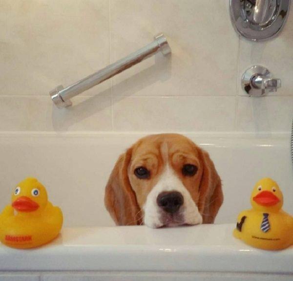 Эти собаки обожают принимать ванну