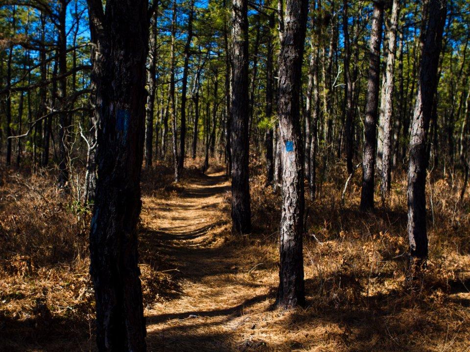 10 самых жутких лесов планеты
