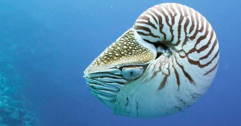 10 самых древних животных на Земле