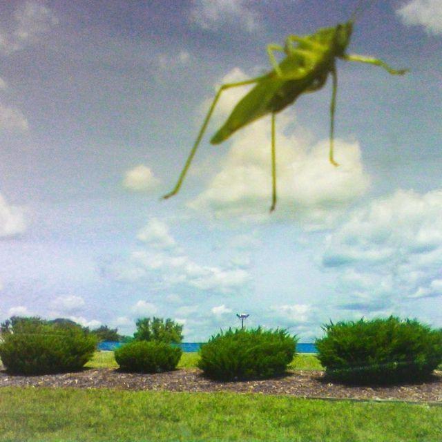Интересные снимки, которые могут обмануть наше зрение