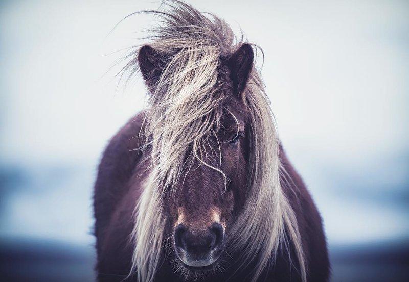 Художественные снимки максимально харизматичных животных