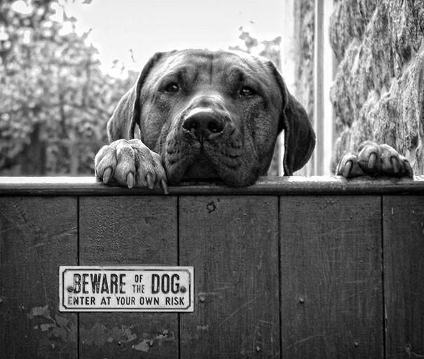 Злые собаки, которых хочется погладить