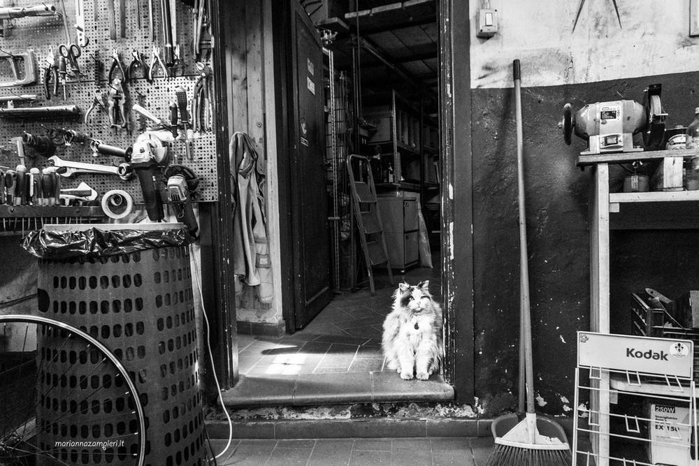 Кошки, которые живут в местах, где работают люди
