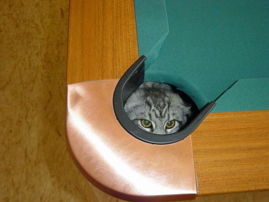15 котов, которые расположились в самых неожиданных местах