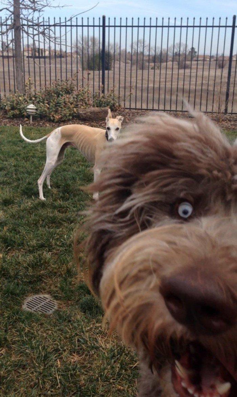 18 собак, которые нагло попали в кадр