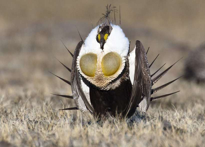 Необычные и удивительные птицы мира
