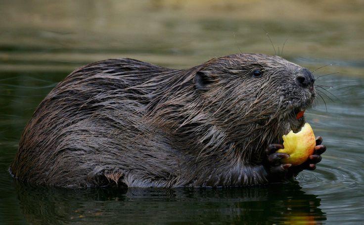 15 опасных животных, которых мы считаем милыми