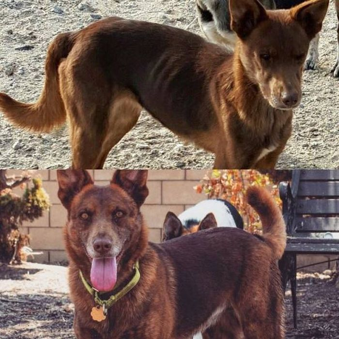 Преображение животных: до и после
