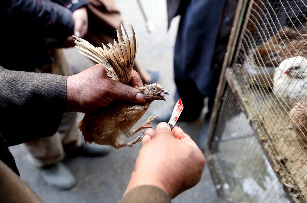 Фотопроект о птичьем рынке в Кабуле