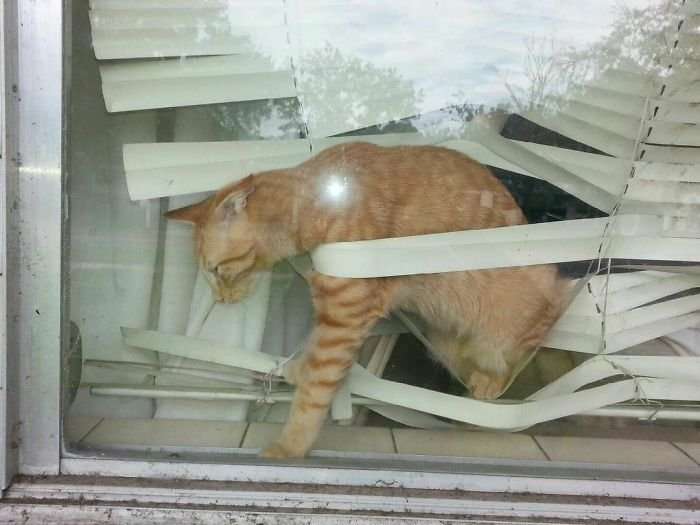Кошки проказничают и поднимают нам настроение