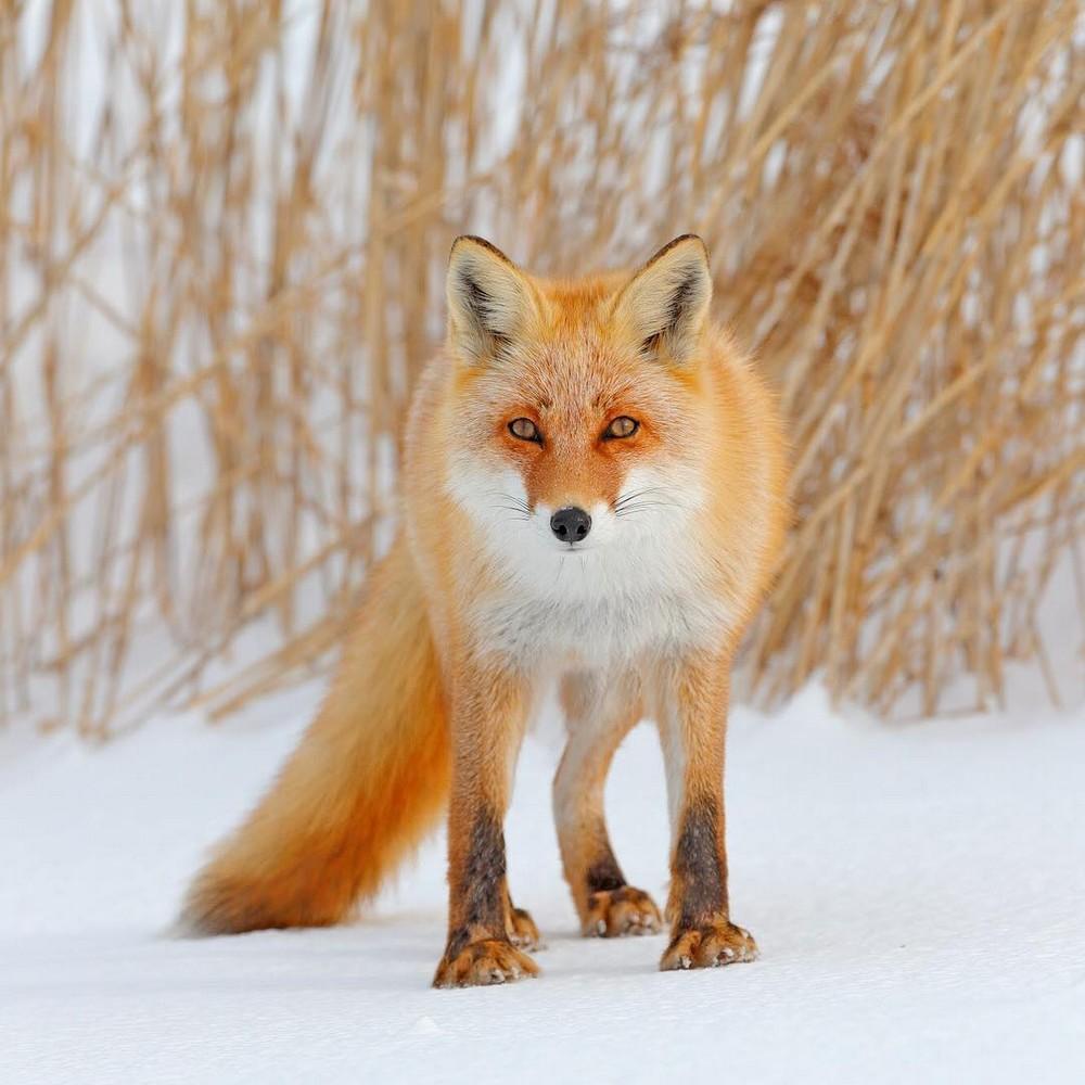 Животные на снимках Ондржея Просицкого