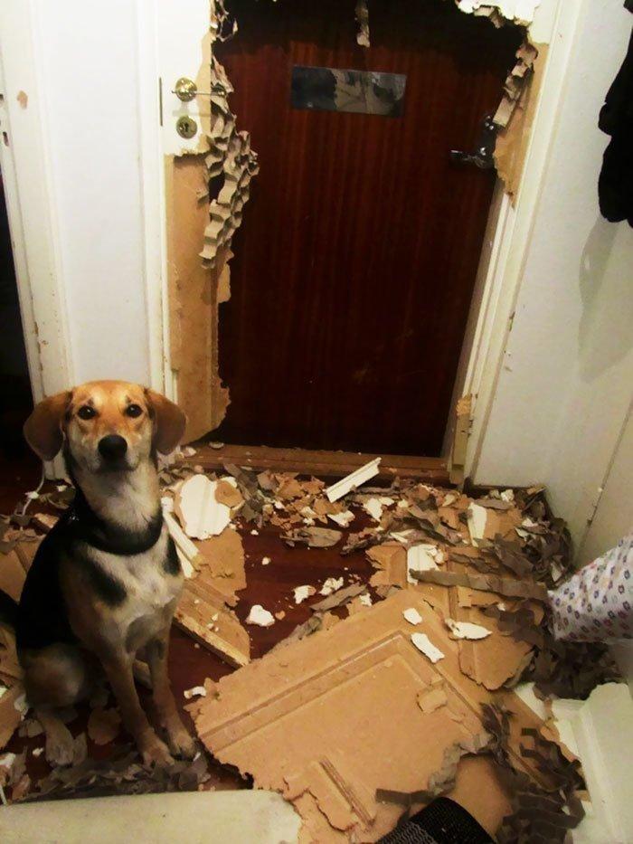 Они оставили животных одних дома и пожалели об этом