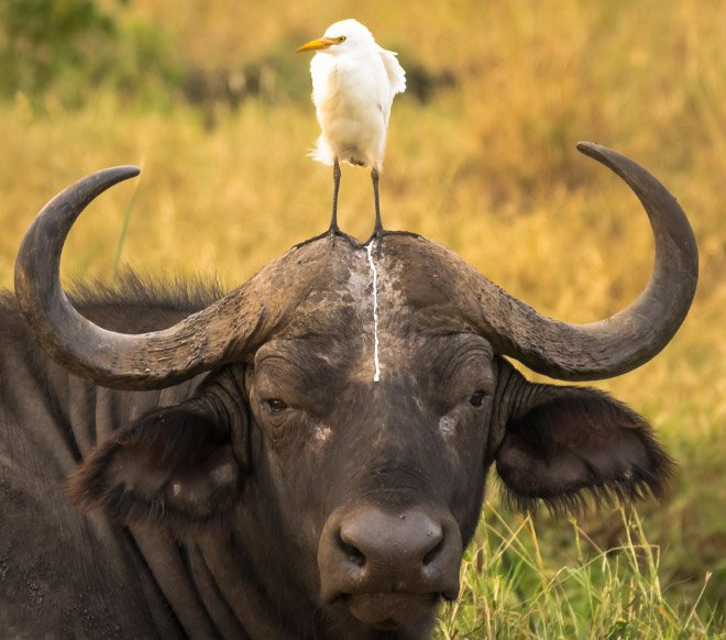 Забавные животные, которые оседлали своих собратьев