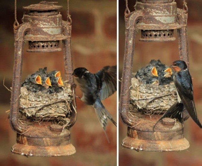 Гнезда птиц в самых необычных местах