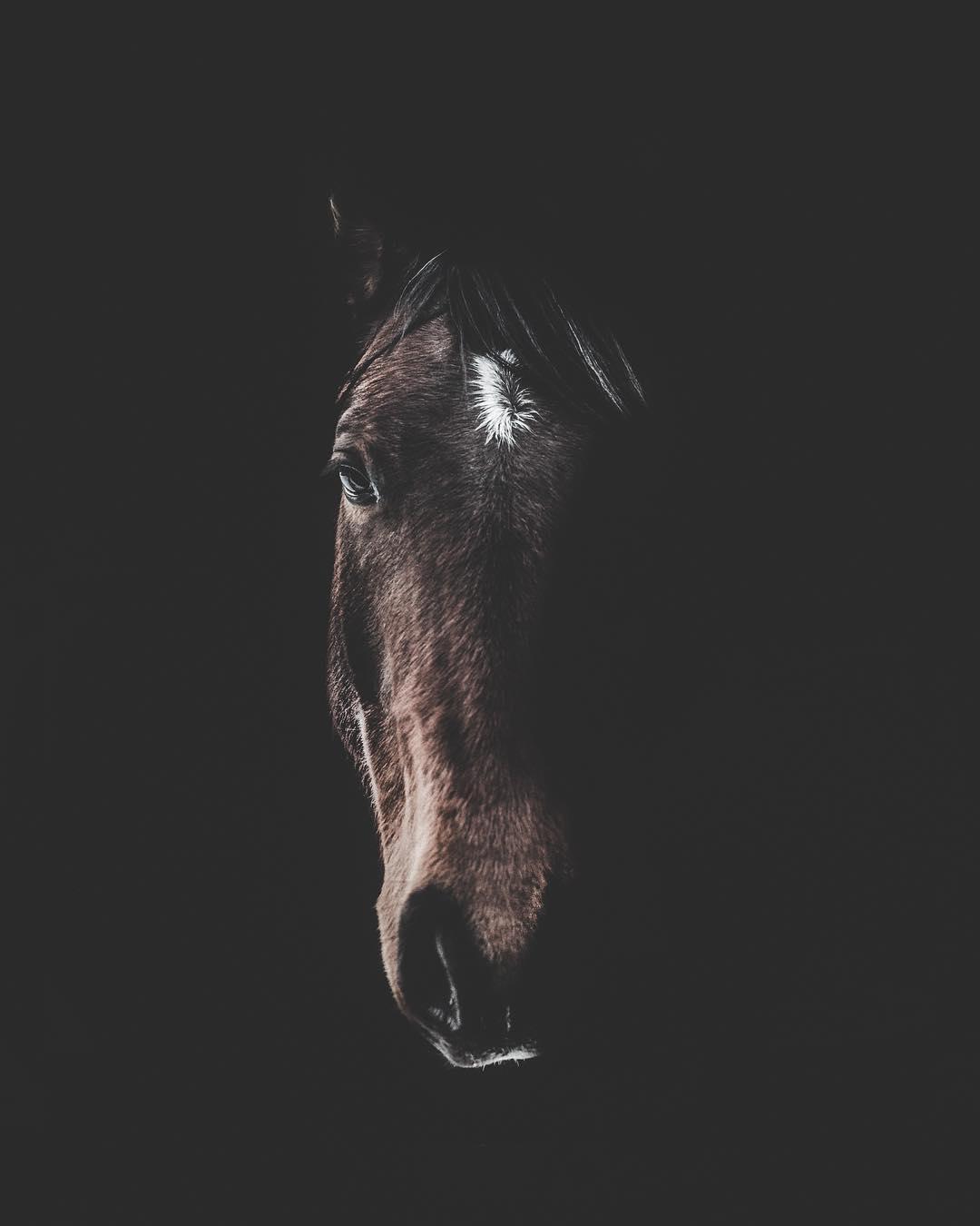 Потрясающие портреты животных от Дугласа Фира