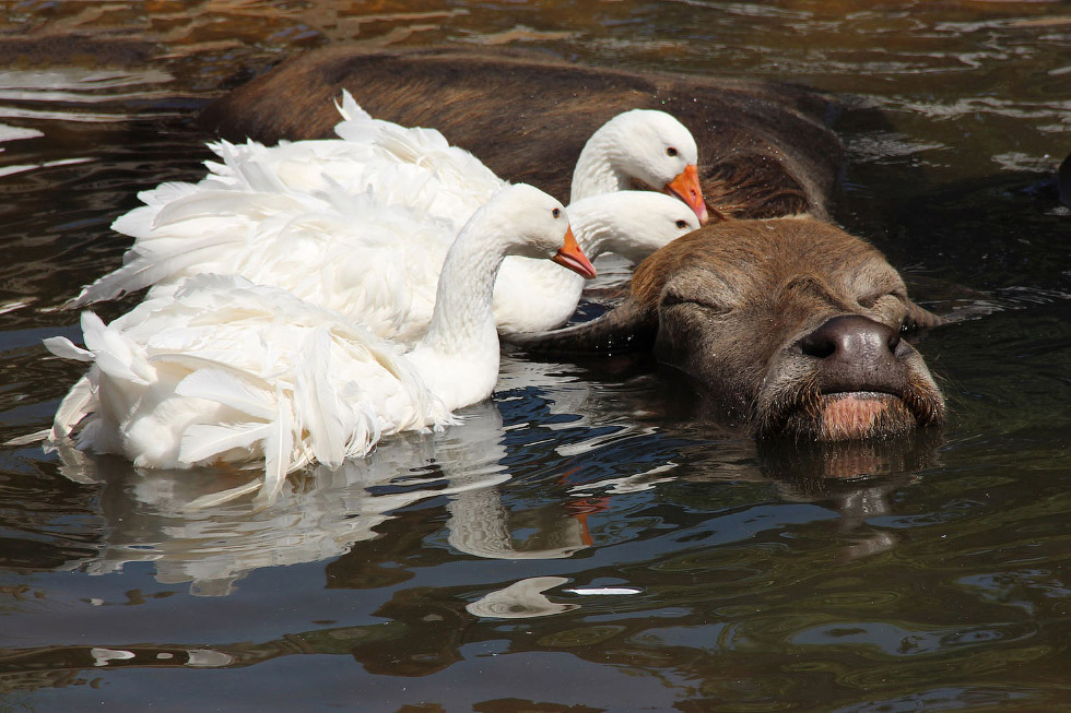 Позитивная подборка плавающих животных
