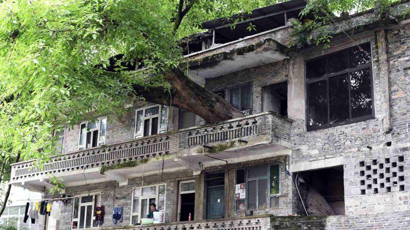 Жилой дом с растущим внутри 400-летним деревом