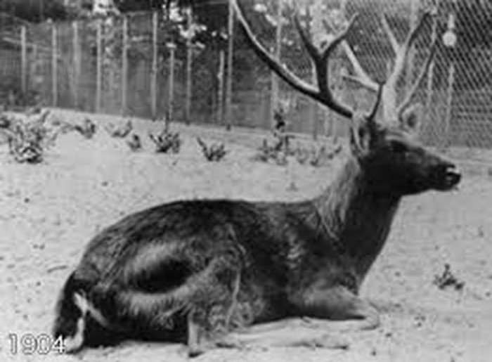 20 видов животных, которые вымерли в результате человеческой деятельности
