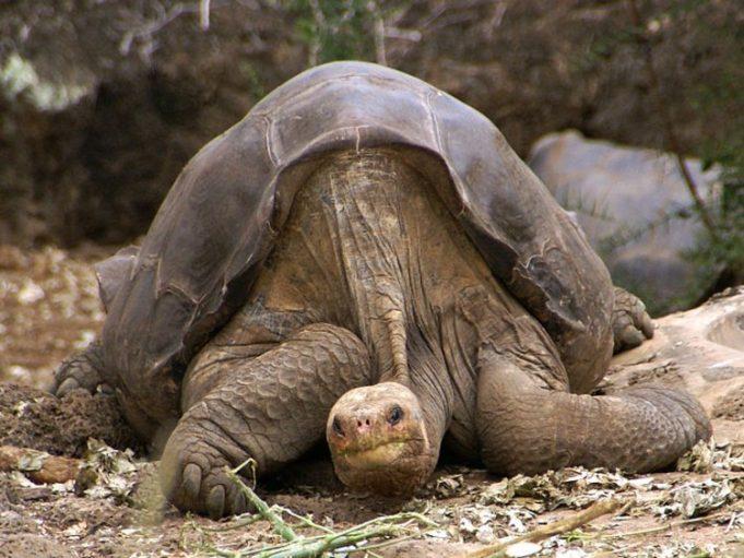 15 животных, которые вымерли