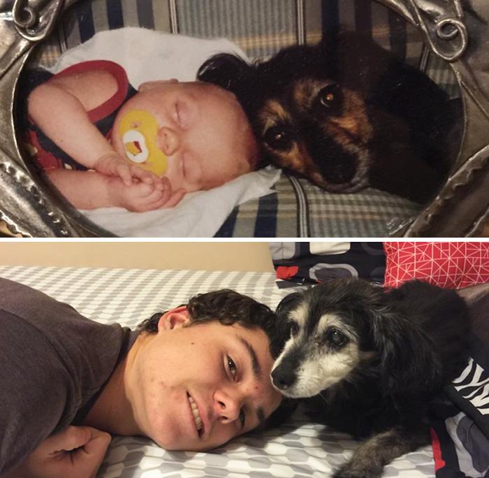 Собаки и их хозяева выросли вместе