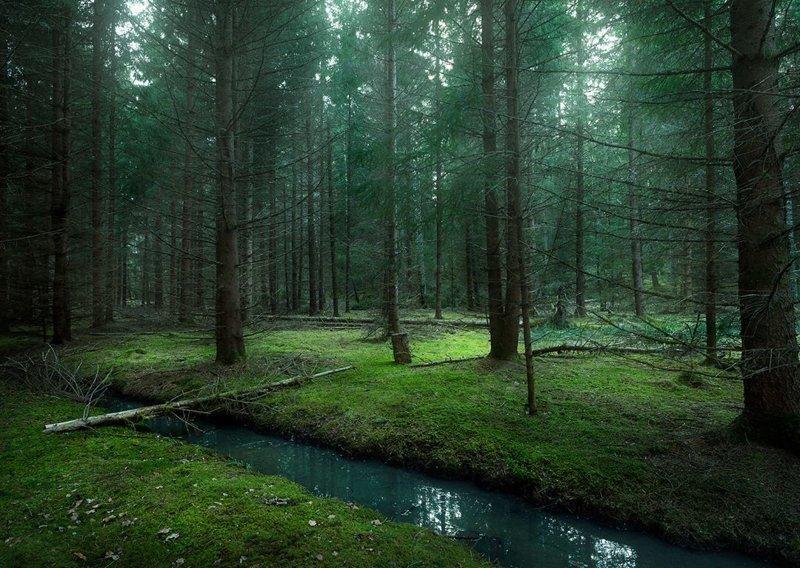 Приятная красота леса